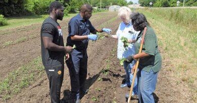 community-garden-projects-taking-hold-–-arkansas-online