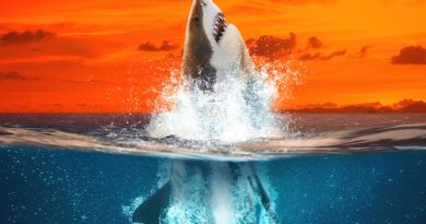 stream-it-or-skip-it:-'air-jaws:-going-for-gold'-on-discovery+,-where-great-whites-leap-from-sea-to-sky-–-decider