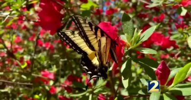 ohio's-hospice,-retirement-communities-host-butterfly-release-memorial-service-–-whio-radio