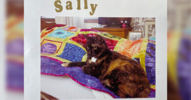 sally-the-cat-comforts-dementia-patients-at-the-end-of-their-life-–-wxow.com
